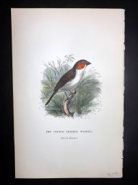 C. W. Gedney 1888 Antique Hand Col Bird Print. Orange Cheeked Waxbill